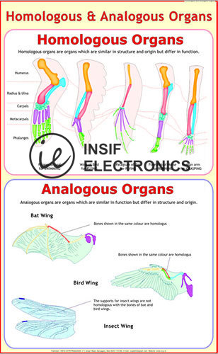 product/enlarge/Analogous-Homologous-Organs.jpg